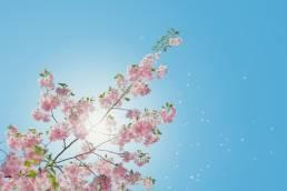 Spring Fest Narragansett UMass thumbnail
